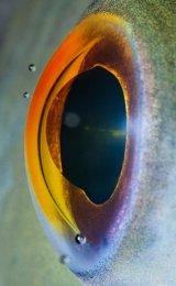 ������ � ���������� fish-eye